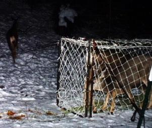 Deer1v3