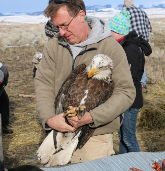 Eagle capture and release