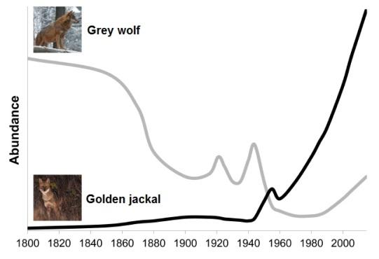 WolfJackalAbundance