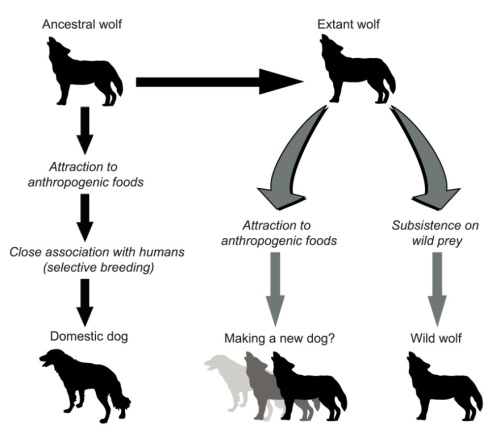 DogDomestication